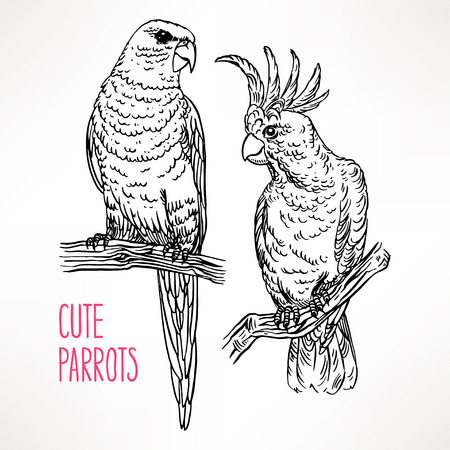Two beautiful exotic sketch parrot. hand-drawn illustration