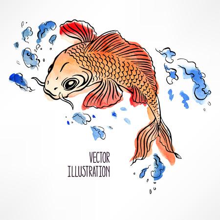 pez carpa: hermosa carpa de color naranja y rojo sobre fondo blanco. dibujado a mano ilustración