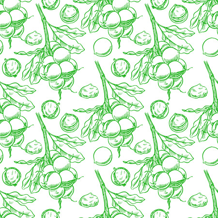 therapeutic: seamless background of green macadamia branches with fruits. hand-drawn illustration