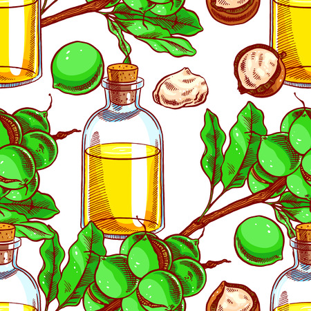 macadamia: seamless colorful background with macadamia nuts and a bottle of oil. hand-drawn illustration Illustration