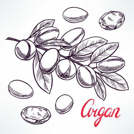 Argan sketch tree branch with fruits. hand-drawn illustration 向量圖像