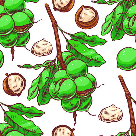 macadamia: seamless background of macadamia branches with fruits. hand-drawn illustration