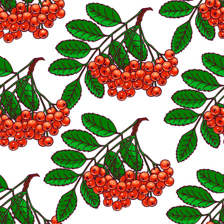 beautiful seamless pattern with bunches of ripe rowan. hand-drawn illustration Illustration