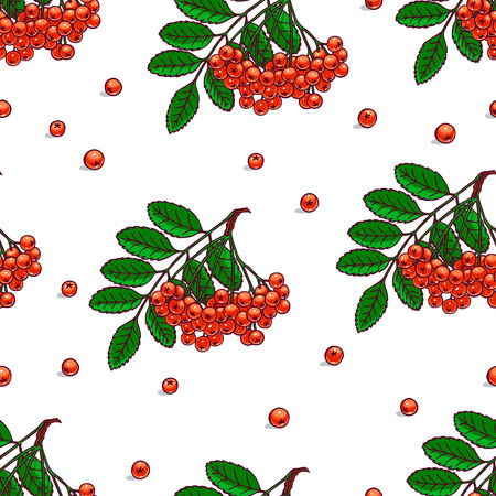bunches: beautiful seamless pattern with bunches of ripe rowan. hand-drawn illustration Illustration