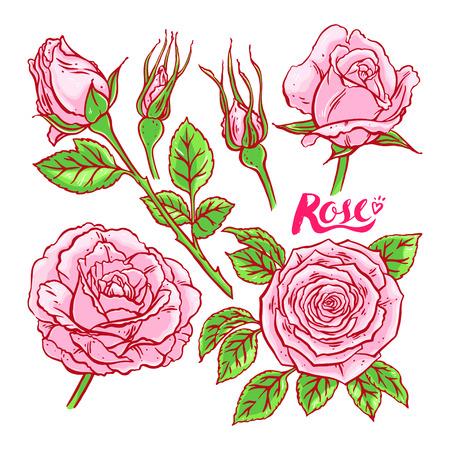 beautiful set of pink roses. hand-drawn illustration