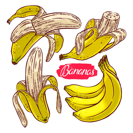 retro color: cute set of different colorful bananas. hand-drawn illustration