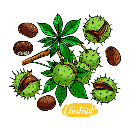 nutshells: beautiful set of different colorful chestnuts. hand-drawn illustration Illustration