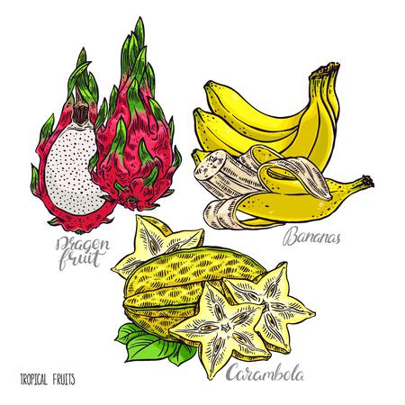 exotic fruits: beautiful set of delicious exotic fruits. dragon fruit, carambola and bananas. hand-drawn illustration Illustration