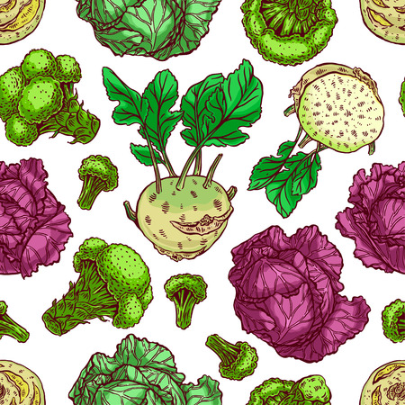 kale: cute seamless background of various kinds of cabbage. white cabbage, Scotch kale, kohlrabi, broccoli. hand-drawn illustration Illustration