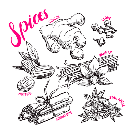 clove: Beautiful collection of diffent spices on a white background. Ginger, clove, star anise and others. Hand-drawn illustration Illustration