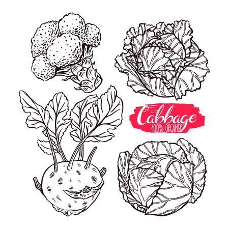 Netter Satz von verschiedenen Arten von Kohl. Weißkohl, Scotch Kohl, Kohlrabi, Brokkoli. von Hand gezeichnete Illustration