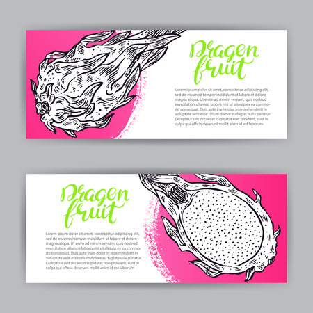 two beautiful banners of ripe delicious sketch dragon fruit. hand-drawn illustration