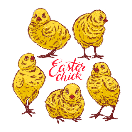 Easter chicks. Set of cute colorful chicks. hand-drawn illustration Illustration
