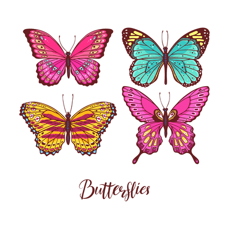 Beautiful set of colorful butterflies. hand-drawn illustration