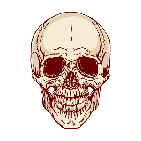 Hand Drawn Illustration Of Anatomy Human Skull With A Lower Jaw ...
