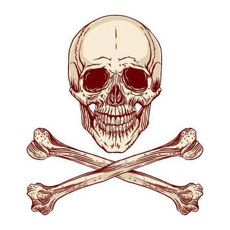 skull and crossed bones: Vector illustration of hand-drawn human skull with crossed bones