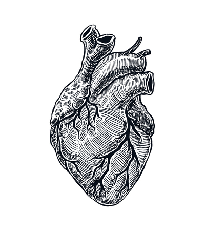 Realistic Human Heart. Vintage style. Hand Drawn illustration Vettoriali