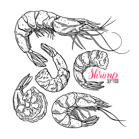 Cute set of cooked different shrimps. Hand-drawn illustration