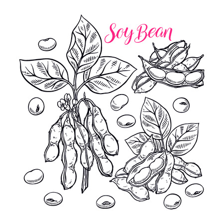 Cute set of soy beans. Hand-drawn illustration