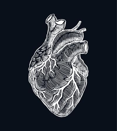 Realistic human heart. Vintage style. Hand drawn illustration