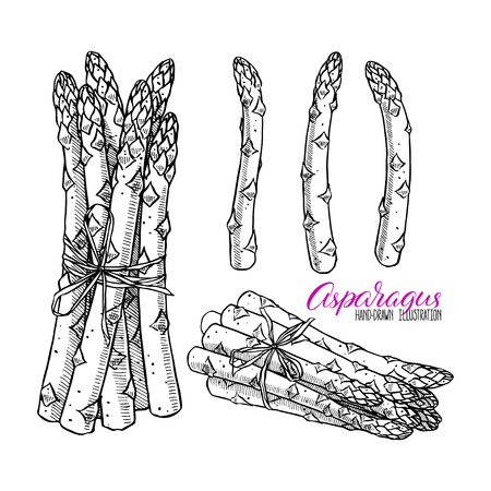 set of ripe asparagus. hand-drawn illustration
