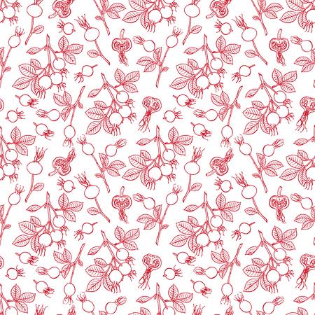 beautiful seamless background of dogrose fruits. hand-drawn illustration