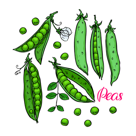 Cute set of ripe fresh peas. Hand-drawn illustration Stock Illustratie