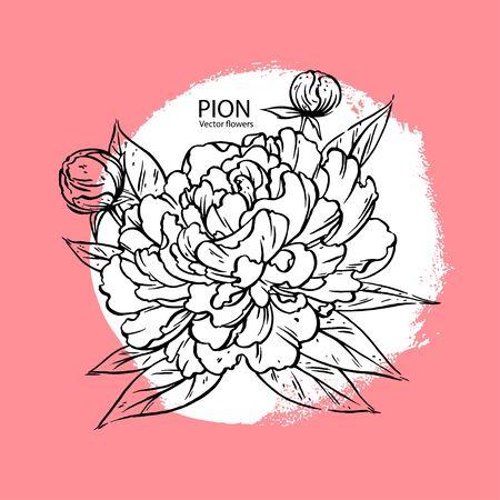 Hand drawn pion flower realistic. vector llustration Иллюстрация