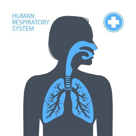 Human respiratory system. Vector illustration