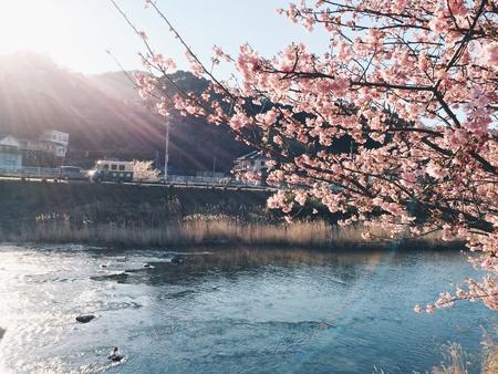 Beautiful sakura's in Japan