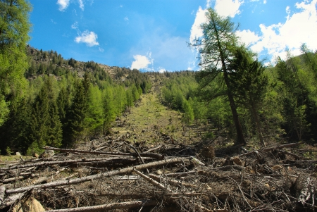 felled: Trees felled by avalanche Stock Photo