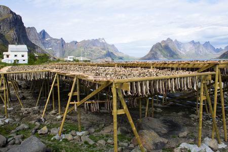 stockfish: Stockfish rack in the Lofoten Islands, Norway