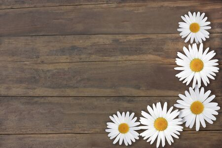 Beautiful daisies. Gorgeous texture old brown wood. Frame of flowers. Background