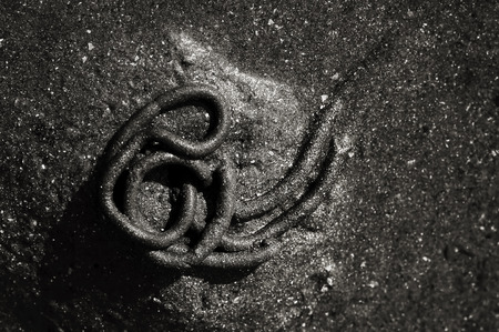 lugworm: strange drawing made by a marine worm arenicola marina in the sand on the beach