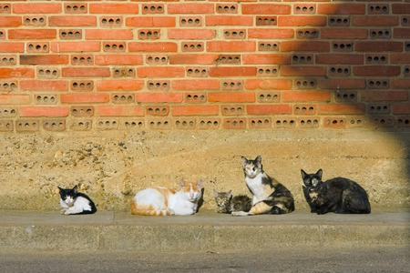 scraped: cats on the wall at sunrise Stock Photo