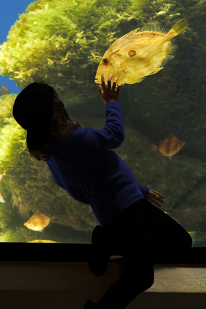 aquarium visit: child in silhouette watching a John Dory fish at the aquarium
