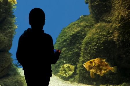 aquarium visit: child in silhouette watching a John Dory fish at the aquarium