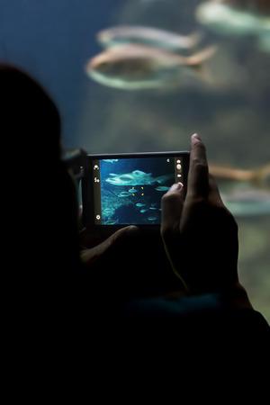 aquarium visit: man in silhouette taking photos with movil to the fish in the aquarium