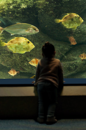aquarium visit: baby girl  unfocused observing fish in the aquarium