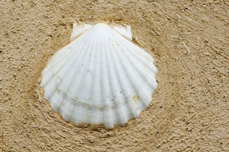 mud wall: shell on mud wall  for pilgrims in Way of St James,  Camino de  Santiago, to Compostela, Galicia, Spain