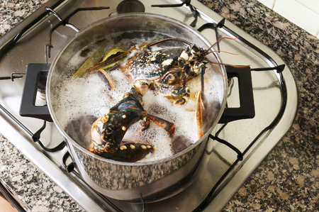 lobster pot: lobster cooked in the pot in the kitchen, Homarus gammarus, of atlantic coast Stock Photo