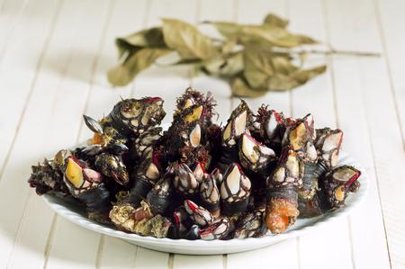 whimsy: fresh goose barnacles  of  Galicia Spain  atlantic coast