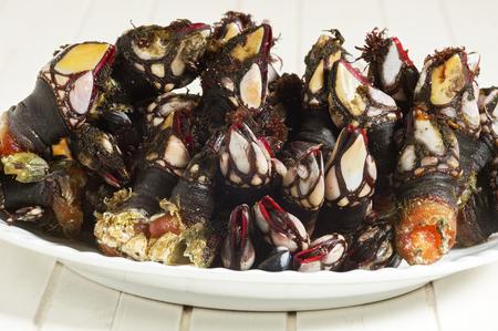 barnacles: fresh goose barnacles  of  Galicia Spain  atlantic coast