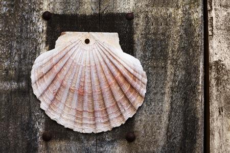 way of st  james: pilgrim scallop symbol in wooden door , Way of St James,  Camino de  Santiago, to Compostela, Galicia, Spain Stock Photo