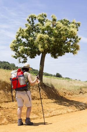 way of st  james: pilgrims near Astorga , Way of St James,  Camino de  Santiago, to Compostela, Leon, Spain Stock Photo