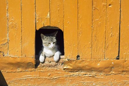 grey eyed: cat in vintage wooden door