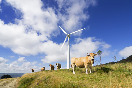 generators: wind turbines with cows and calves in eolic farm , electric wind generators, renewable energy Stock Photo
