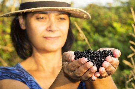 brambleberry: fresh ripe blackberry , mulberry fruit , in hands of unfocused woman ,  in the field