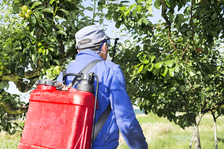 fumigation fruit trees by farmer