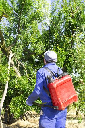 contaminacion del agua: árboles frutales fumigación por agricultor